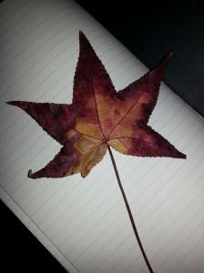 Leaf Fall 2013