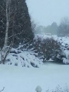 snow jan 2014 3