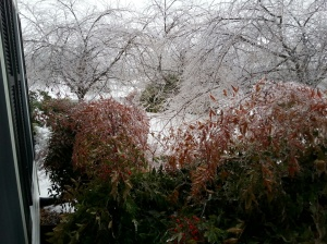 Ice Feb 5-9