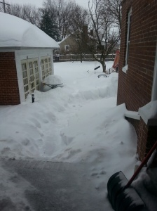 I shoveled a path so Gwen could pee.