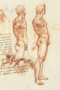 Da Vinci nude sketches