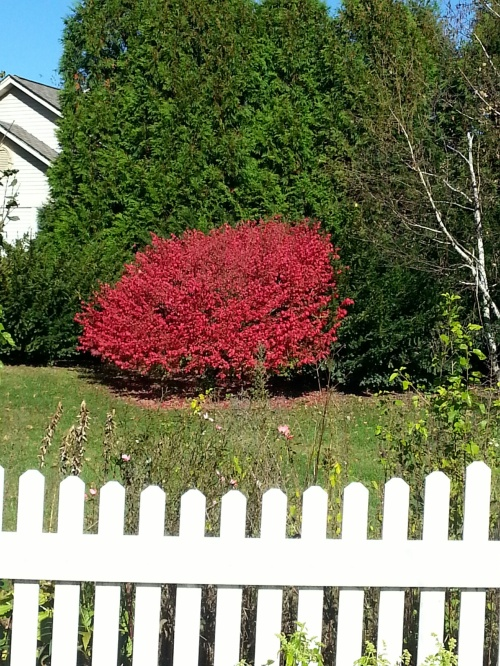 Oct 27 2014 burning bush