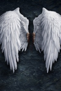 Angel Wings ripped out