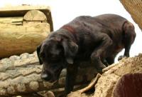 rescue pup 2