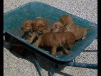 rescue pup 4